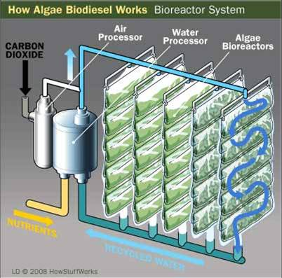 Biodiesel fra alger illustration