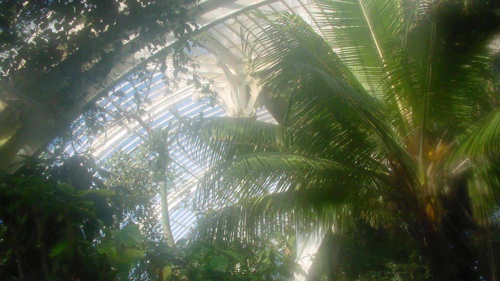 Hvad er drivhuseffekt? Bliv klogere på drivhuseffekten i denne artikel.