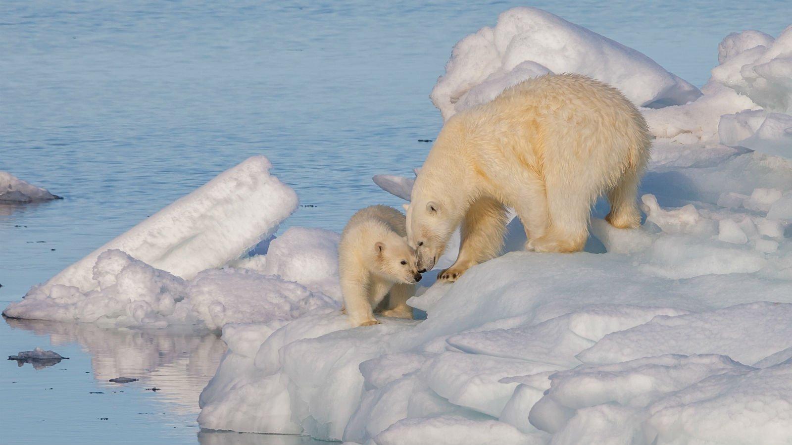 Bliv klogere på global opvarmning i dette tema.