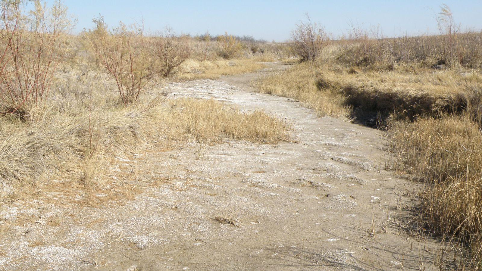 Klimaforandringernes konsekvens for naturen. Udtørret vandløb i Kansas, USA