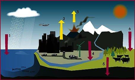 Kulstofkredsløbet