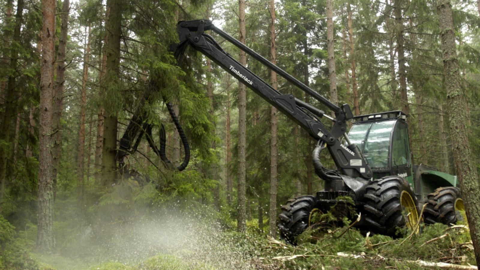 Verdens regnskove fældes og afbrændes i et foruroligende tempo. Læs mere om skovrydning og skovenes betydning for klimaet her.