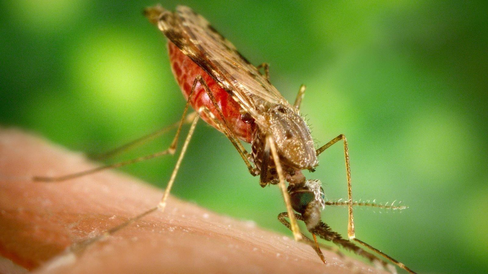 Læs mere om klimaforandringernes betydning for sydomme som malaria, dengue feber og vestnilvirus