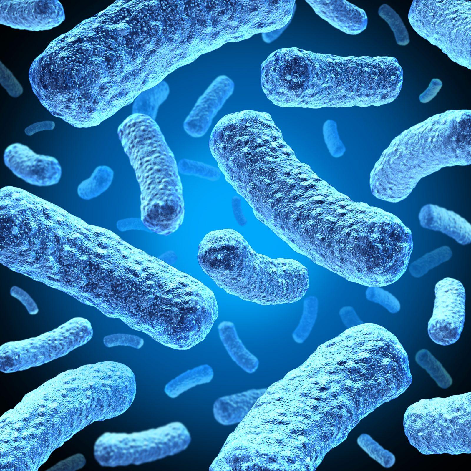 Bakterier tarme