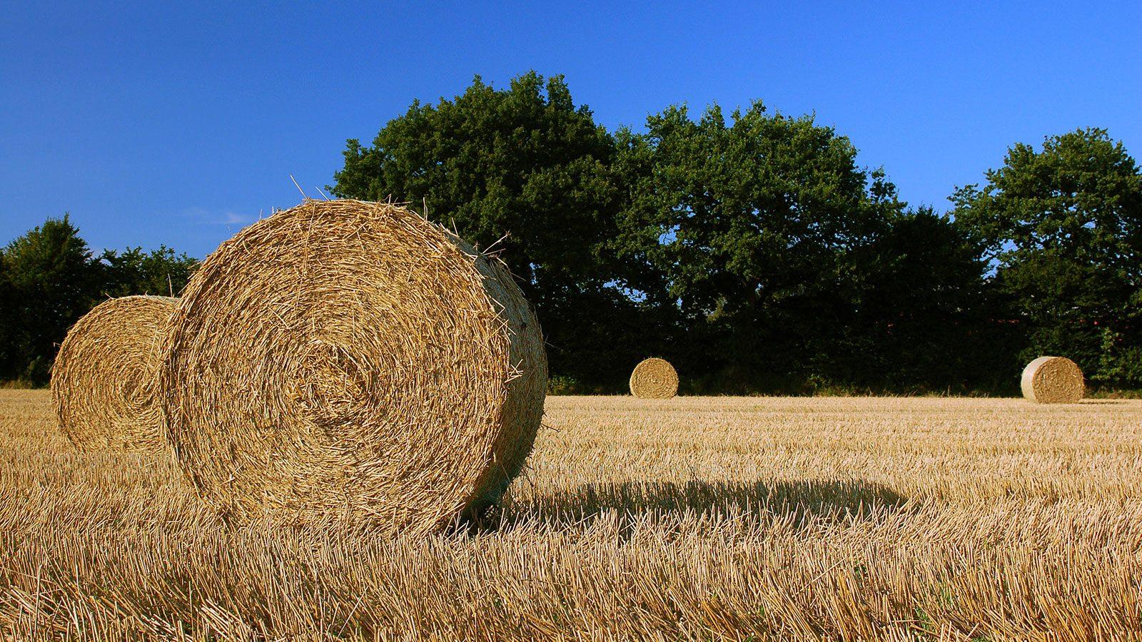 Biobrændsler. Foto: Jan van der Crabben/Wikimedia Commons