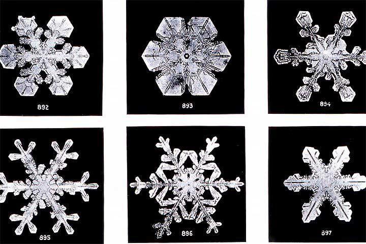 snowflakessavedforweb