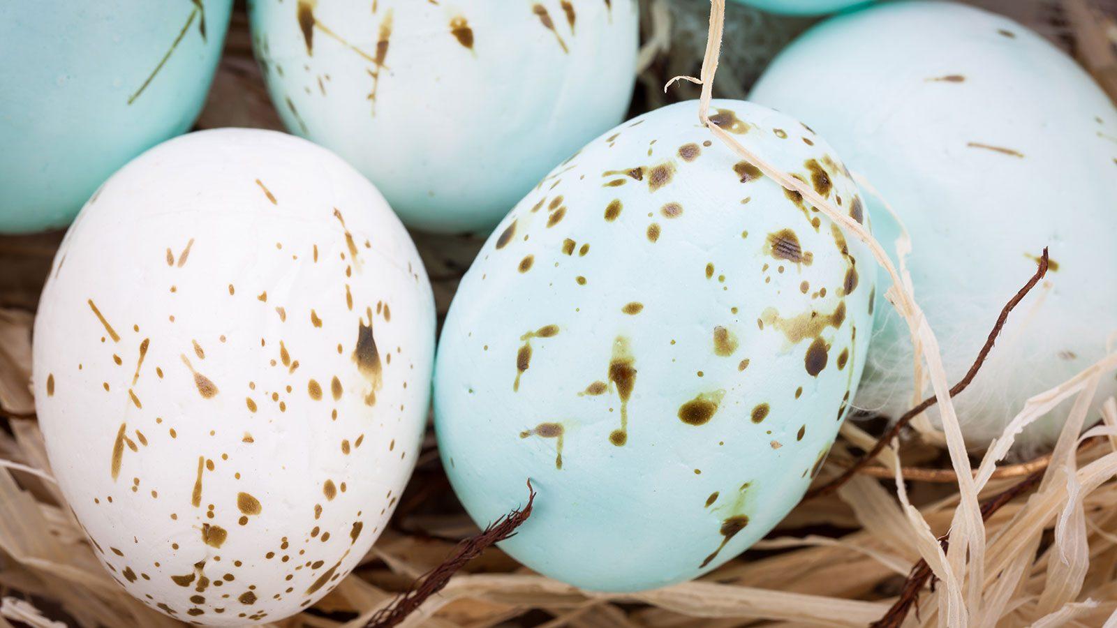 Hvad kom først? Hønen eller ægget?