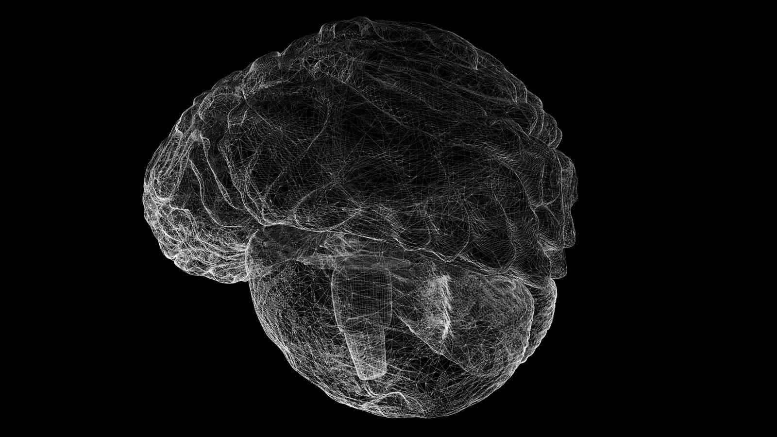 Motion forhindrer hukommelsescenteret i vores hjerne i at skrumpe