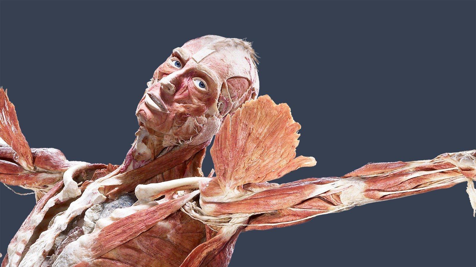 BODY WORLDS kroppen