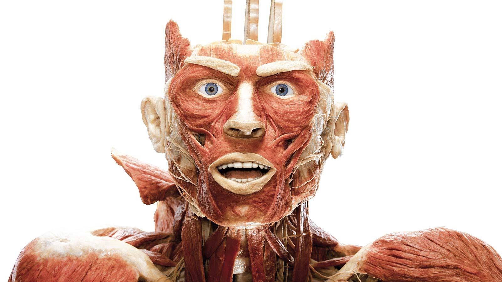 menneskekroppe udstilling