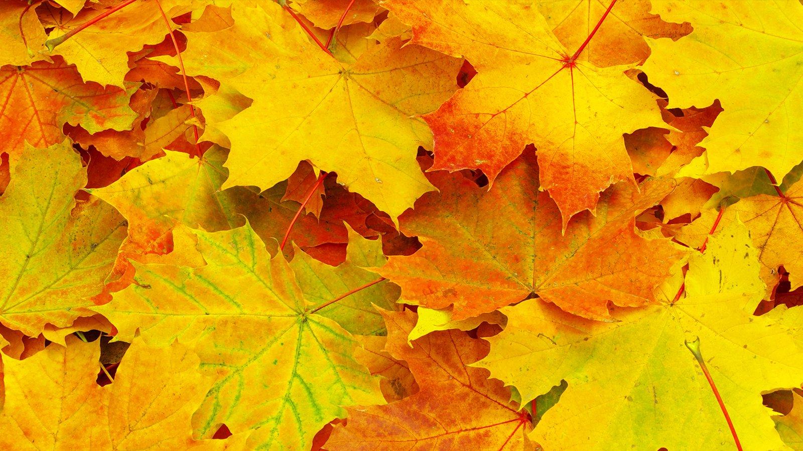 Test din viden om efteråret